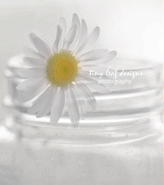 Daisy in Mason Jar Photography 10 x 10 Standout