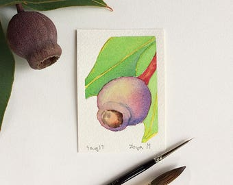 Gum nut - original aceo watercolor painting - small art work - mini art original painting - artist trading card