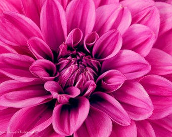 Dahlia Flower Print, Fine Art Photography, Flower Photography, Dahlia Wall Art, Dahlia Home Decor, Fine Art Home Decor, Fine Art Wall Decor