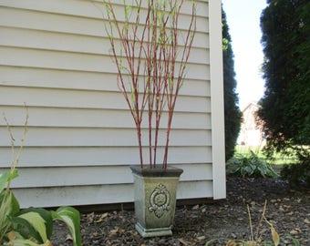 "Tall Twig Branch 50"" Tall Silk Foliage Cottage Greenery New Growth Branch Budding Branch #294A"