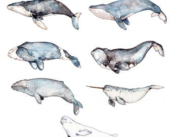 Small Whales Print |  Humpback Whale | Narwhal | Right Whale | Watercolor | Drawing | Marine | Nature | Marie-Eve Arpin |  Illustration