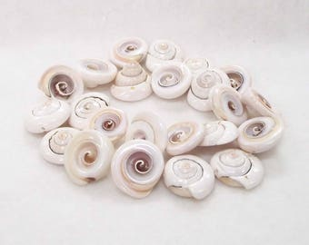 "Unique Off-white/Pinkish Curly Shell Beads in a 15"" Strand -  Center Drilled With 1mm Hole - Approximately 3/4"" Shells"