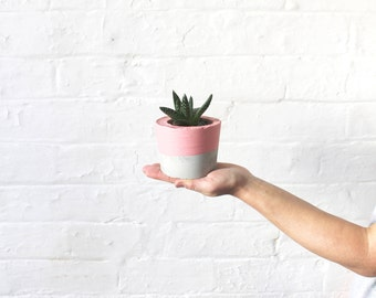 Pink Top Concrete Planter