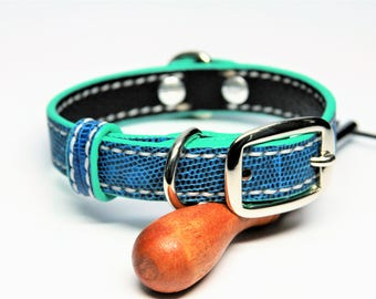 Dog Collar Genuine Lizard Blue/Turquoise