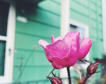 Portland Rose / Digital Download / Purple / Mint / Creative Commons