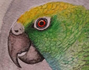 Watercolor on files, work original. Scientific illustration of birds of Colombia