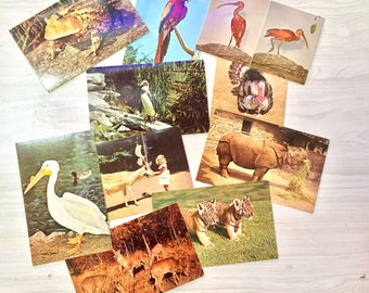Vintage Postcards | Holiday Postcards | Vintage Ephemera | Vintage Souvenir | Travel | Scrapbooking | Trains | Planes | Animals | Religious