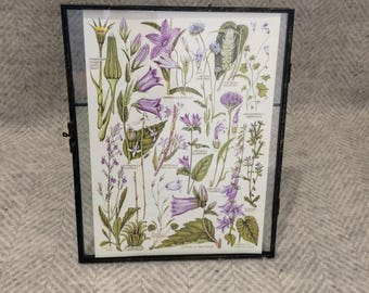Vintage framed botanical drawing, flower illustrations, botanical print, floral, in glass frame, Green leaves Purple