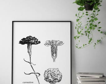 Carnation botanical art print, Carnation Vintage art print, Carnation wall art, Vintage Botanical wall art, Floral illustration wall print