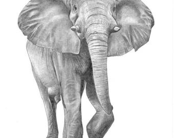 Elephant Pencil Drawing, Limited Edition Fine Art Print A4