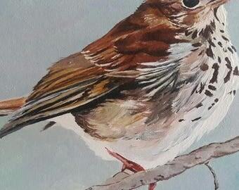Chubs Bird