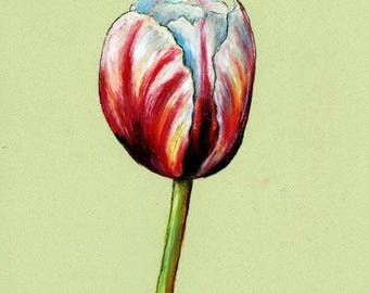 Tulip Original Oil Pastel Painting