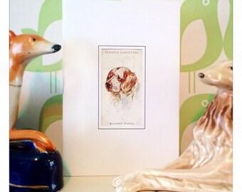 Vintage Dog Greeting Card: Clumber Spaniel