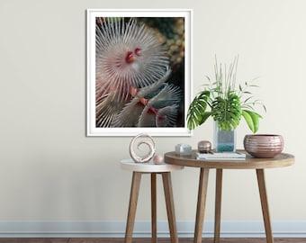 Christmas Tree Worm underwater photo | Framed art print | 8x10 | 11 x14 | 16x20 | 20 x30| Home Decor | Beach house decor | Pink | White