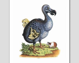 "Dodo Bird Art, Bird Print (Blue Home Decor, Bird Folk Art, Primitive Print) -- ""Extinct Dodo and the Guinea Pig"" 18th Century Artist"