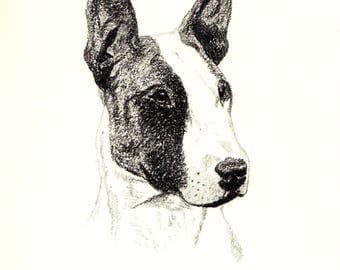 Bull Terrier Art Etsy - Bull terrier art