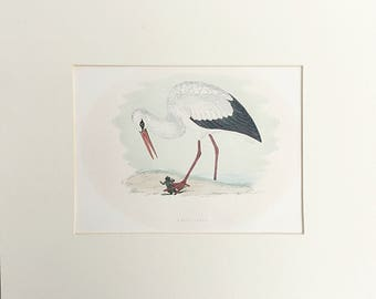 Antique White Heron engraving, Book plate, Bird picture, Natural History, Ornithology, Hand painted