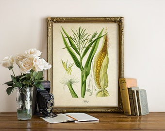 Vintage Botanical Wall Art Print Corn Giclee Kitchen Decor Antique Natural History Vegetable Art Decorative Maize Reproduction VF023