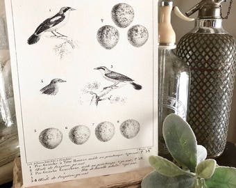 Vintage BIRD Egg Diagram Wood Sign Print Farmhouse Decor Page Wall Art Print  Fixer Upper  Natural History Speckled Egg Botanical LANIUS