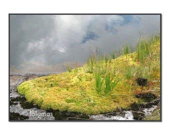 Flora Norway, meditation art, Peaceful photography, Green Wall Art,  Nature Photo, Tundra Flora Norway Lofoten