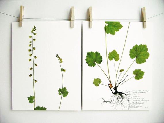 fringecup herbarium specimen art print set matching botanical. Black Bedroom Furniture Sets. Home Design Ideas