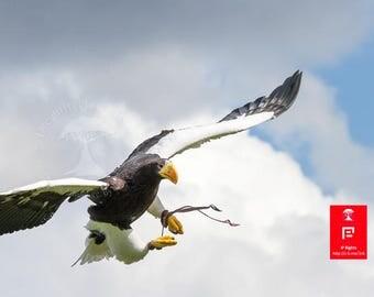 Nature Bird Wall Art | Raptor | Bird Photography | Animal Photography | Minimalist Bird Art | Wildlife Art | Bird of Prey | Eagle Wall Print