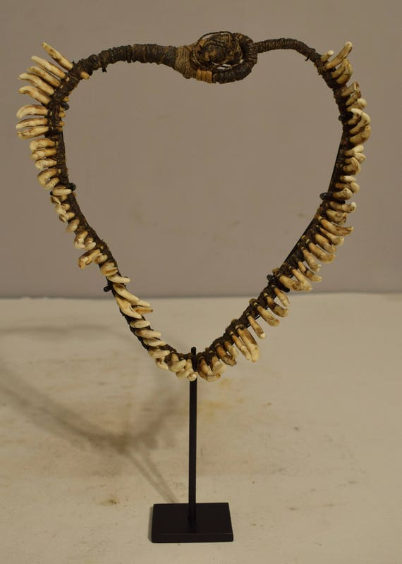 Papua New Guinea 1970 Dog Teeth Necklace Brides Price Currency Status Dog Teeth Necklace
