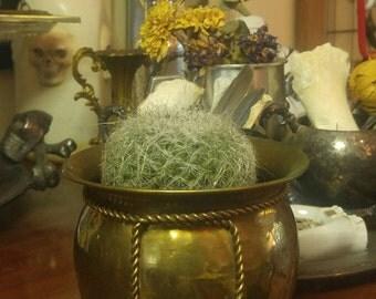 Cool Vintage Hammered Brass Planter ~ Stash Pot ~ Rope Trim Planter