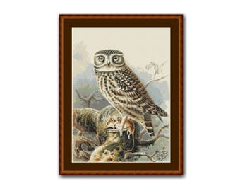 Little Owl Counted Cross Stitch Pattern / Chart,  Instant Digital Download   (AP028)