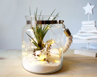 Christmas Air Plant Terrarium Kit | Coastal Wedding Favor | Tillandsia Seashell Terrarium