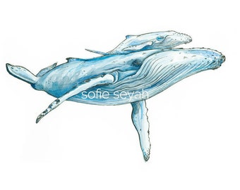 Humpback Whale and Calf - Sofie Seyah Ultramarine Indigo Watercolour and Ink Nautical Illustration - Nursery Art - Art Print