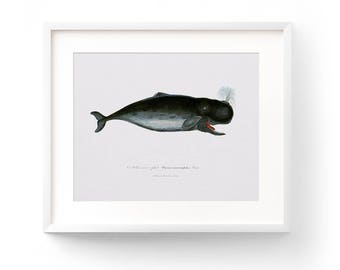 Nautical Nursery, Whale Art, Whale Print, Printable Art, Boy Nursery Decor, Boy Nursery Wall Art, Nursery Decor, Nursery Art, Whale, Vintage