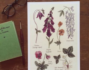 May Flower Study A4 Giclee print