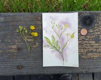 "Original Watercolor of Wild Cinquefoil  - herb art, botanical illustration, floral print, botanical art - 4 x 6"""