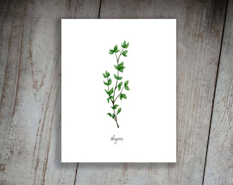 Thyme Watercolor Illustration Art Print Kitchen Herbs Kitchen Signs, Wall Decor