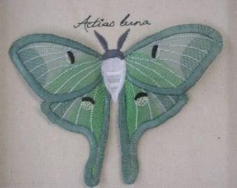 Organza Lunda Moth Winged Curiosity Specimen Shadow Box
