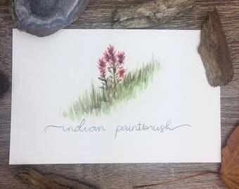 Indian Paintbrush Print