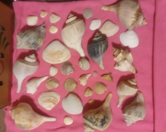 Sea Shells Lot