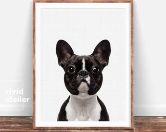 Dog Print, Boston Terrier Print, Pet Wall Art, French Bulldog, Animal Photography, Puppy Printable, Pet Portrait, Dog Poster, Nursery Decor