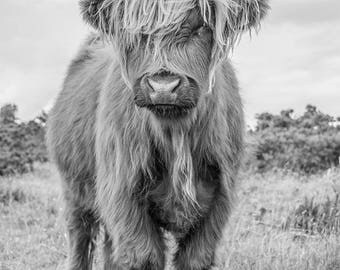 Limited Edition 1/1 Art Print For Sale - Black And White Highland Bull -  Expensive Museum Quality Canvas - Signed And Numbered By Artist.