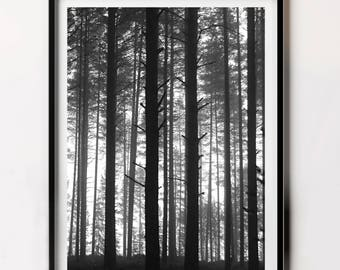 Forest Print, Forest Photography, Woodland Photography, Woodland Poster Printable, Black and White Photography