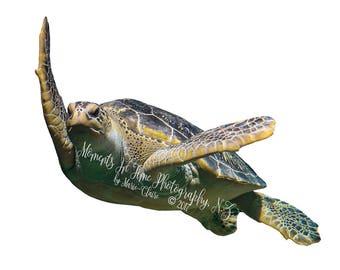 MIT Turtle Swimming Underwater Digital PNG Overlay