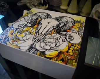 Box - Ram Skull, Color