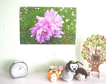 Pink Wilt (Physical Print) A4