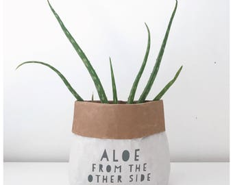 Aloe from the other side, plant pot cover, gift bag.