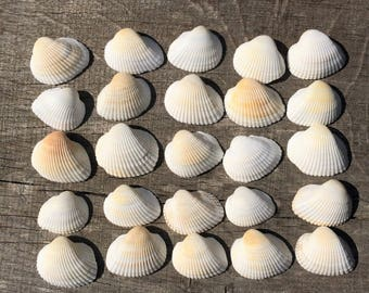 25 White Seashells, Bulk Natural shells, Seashells Wedding Decor, Seashells Beach Party Decor, Genuine Sea Shells, Beach Home Decor