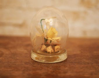 Vintage Preserved Daffodil Globe by Michael R Curzon