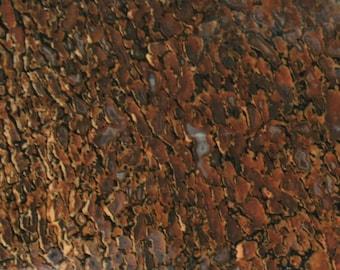 Agatized Dinosaur Bone in Red and Brown 18 cm x 6.5 cm Slab (1)
