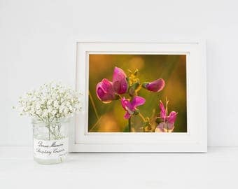 Pink Floral Photography, Sunset Photography, Sunset Art, Fine Art Photography, Nature Prints, Floral Print, Outdoor Photgraphy, Flower Photo