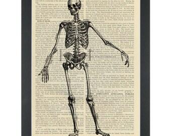 Human Skeleton Anatomy Drawing Dictionary Art Print